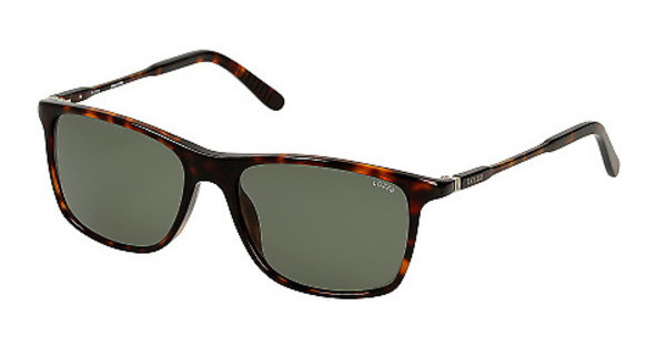 Lozza SL4001M 722P GREENSHINY DARK HAVANA